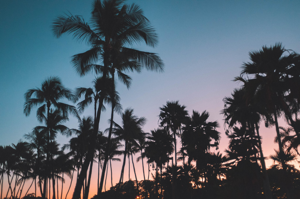 8 Palm Trees
